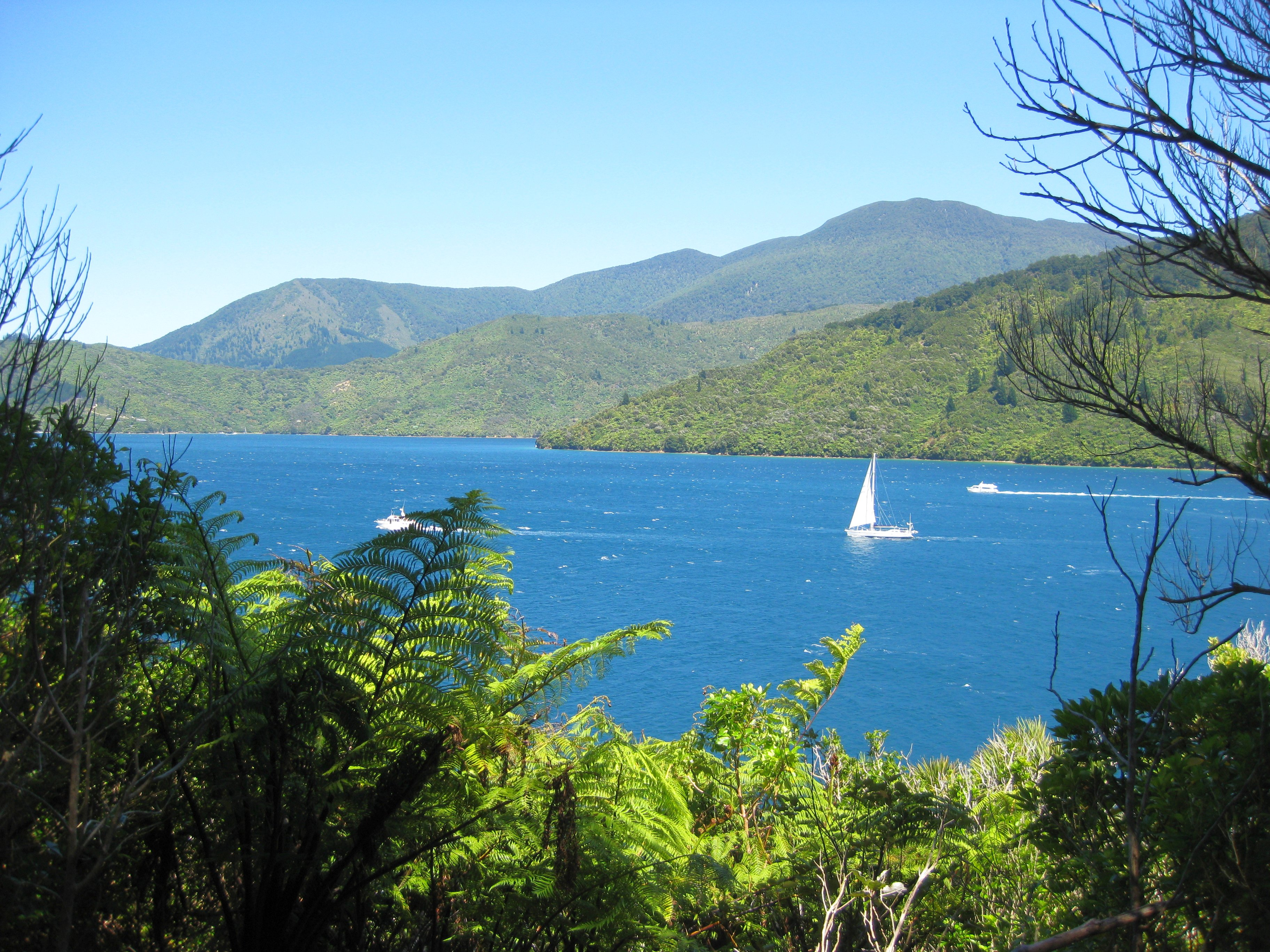 Marlborough Sounds Queen Charlotte Track