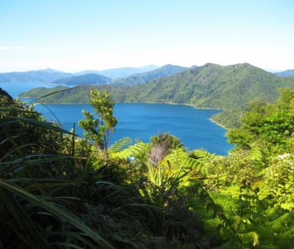 Neuseeland - Das Land der Kiwis